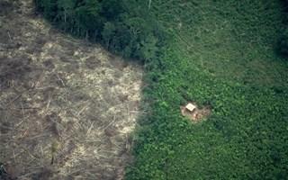 Les 25 entreprises françaises qui détruisent le plus la biodiversité sont...