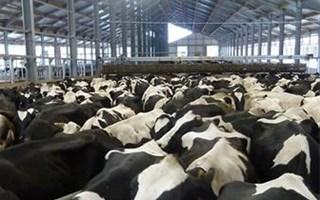 68 % des français opposés aux fermes-usines