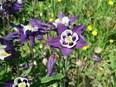 742 espèces de notre flore sauvage sont menacées de disparition