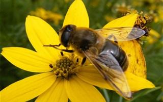 Abeilles : les députés disent non aux insecticides néonicotinoïdes