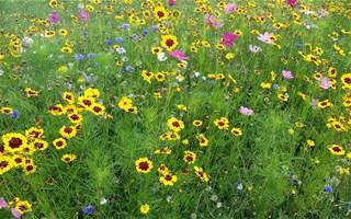 L'Agence Française pour la Biodiversité est lancée !