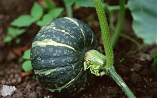 L'agriculture biologique poursuit sa croissance en France