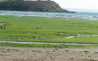 Algues vertes en Bretagne