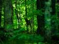 L'Angleterre va planter une nouvelle forêt de 50 millions d'arbres d'ici 2050