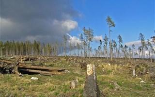 Arbres coupés et déforestation