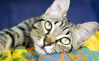 Attention aux anti-puces pour animaux, contenant des pesticides toxiques