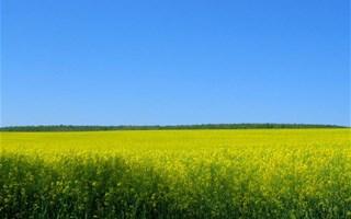 Biocarburant colza