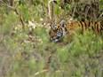 Biodiversité : le nombre d'espèces diminue de façon alarmante