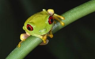 La biodiversité terriblement menacée par le réchauffement climatique