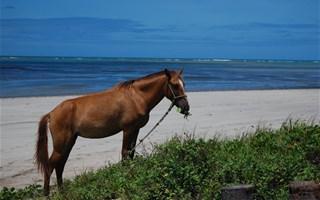 Cheval sur une plage