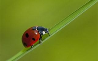 Coccinelle préserver la biodiversité