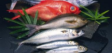 Que connaissez-vous de la pêche française ?
