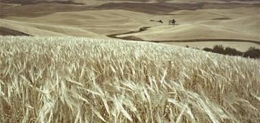 COVID-19 : 27 pays menacés par une crise alimentaire, selon la FAO