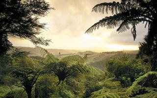 Déforestation : 170 millions d'hectares de forêts pourraient être détruits d'ici 2030