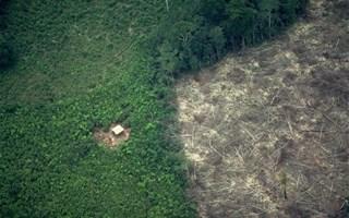 La déforestation aggrave le risque de maladies émergentes
