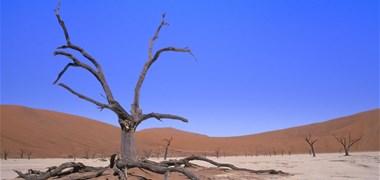 Les 4 dernières années sont les plus chaudes jamais enregistrées