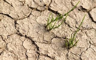 Désertification des sols