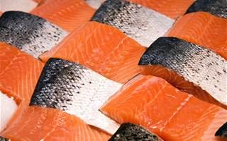 Une étude norvégienne assure que le saumon d'élevage n'est pas nocif pour la santé
