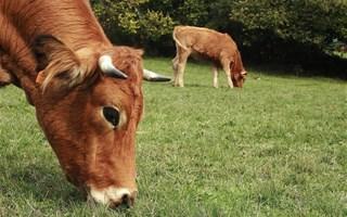 Europe : diminuer le boeuf et de fromage pour réduire les émissions de gaz à effet de serre