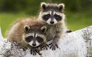 L'Europe dresse une liste des espèces invasives