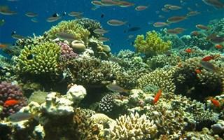 Fonds sous-marins, poissons et coraux