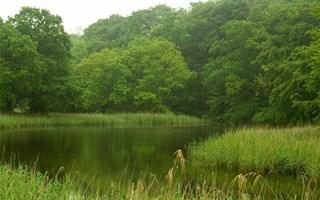 Forêt et lac