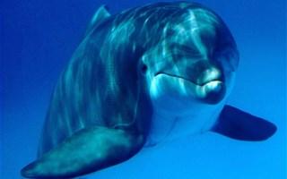 France Nature Environnement dénonce le massacre des dauphins sur les côtes françaises