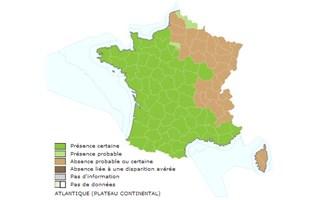 Le frelon asiatique est présent sur tout le sud et l'ouest de l'hexagone