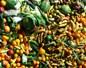 Gaspillage alimentaire : 10 millions de tonnes de nourriture gaspillée par an en France