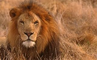 La guerre contre les trafiquants d'espèces sauvages est déclarée