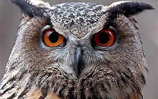 Incendie du plateau de Vitrolles : une désolation pour la biodiversité