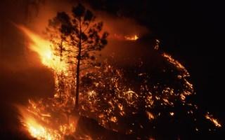 Incendies en Australie : une catastrophe pour la biodiversité locale