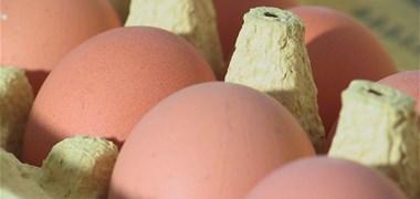 Les industriels se détournent des œufs de poules élevées en cage
