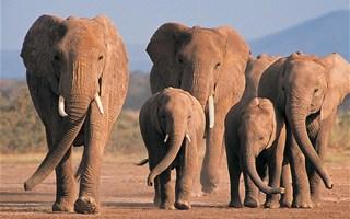 Interdiction de l'ivoire : la lutte contre le trafic d'espèces sauvages s'intensifie