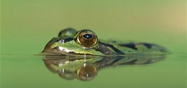 Loi biodiversité : échec de la commission mixte paritaire, le texte repart à l'Assemblée