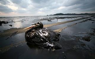 Marée noire Golfe du Mexique