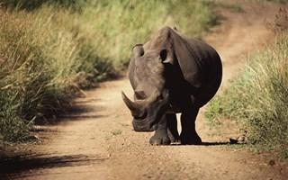 Le massacre des rhinocéros prend des proportions alarmantes
