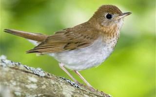 Nourrir les oiseaux, une habitude qui nuit aux espèces