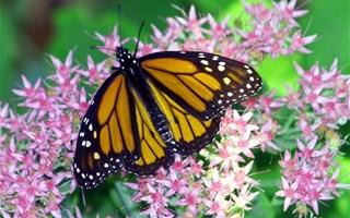Papillon, fleur et biodiversité