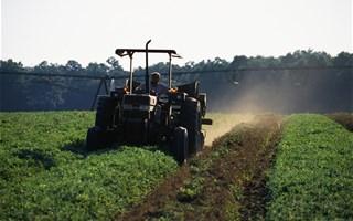 Les pesticides dans les fruits et légumes réduisent la qualité du sperme
