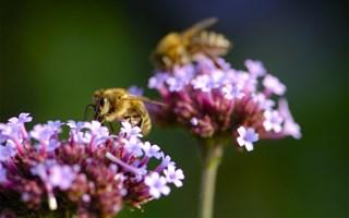 Les pesticides néonicotinoïdes interdits en France depuis le 1er septembre