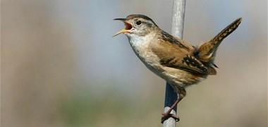 Les pesticides tuent nos oiseaux, nos insectes, nos chauves-souris