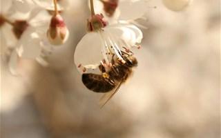 Plan pour diminuer la mortalité des abeilles : et les pesticides ?