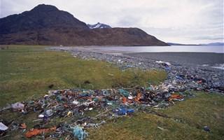 Plus de plastiques que de poissons dans les océans en 2050