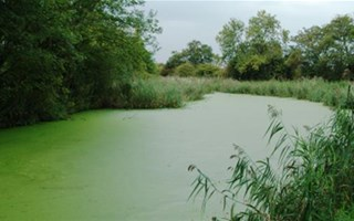 Pollution aux nitrates : la France condamnée par la Cour de Justice européenne
