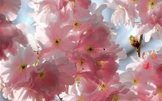 Le printemps météorologique a commencé le 1er mars