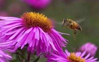 Projet de loi biodiversité : le monde du vivant entre les mains des sénateurs