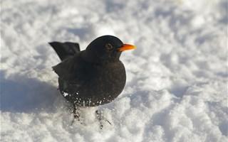 Protection des oiseaux : la LPO porte plainte contre l'État français auprès de l'Europe