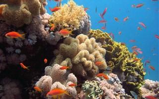 Récifs coralliens