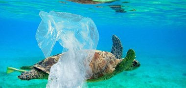Les sacs plastiques jetables désormais interdits